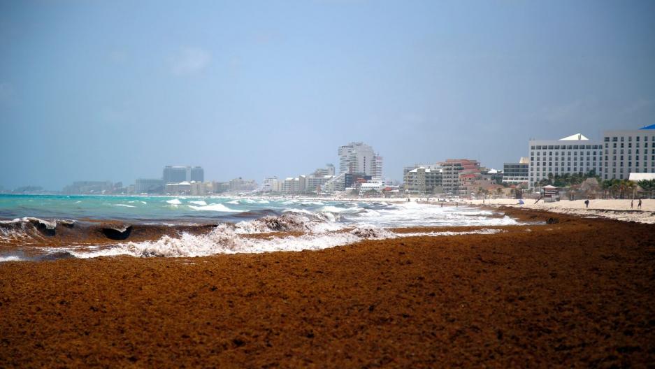 126158 В Мексике нашли решение проблемы водорослей на пляжах