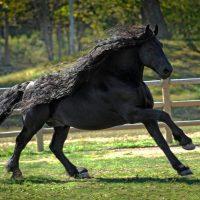 131939 Самый красивый конь в мире Фредерик Великий