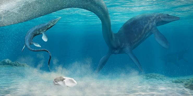 142872 Найденное в Антарктике яйцо принадлежит древнему мозазавру
