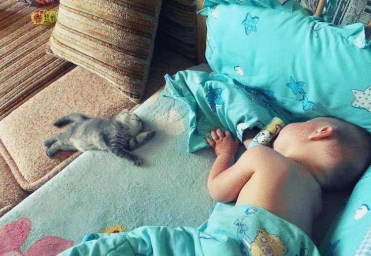 146156 Дети и домашние питомцы — лучшие друзья