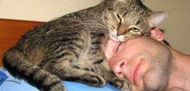 147194 Топ-10 фотографий с домашними животными, которых хочется обнимать и тискать
