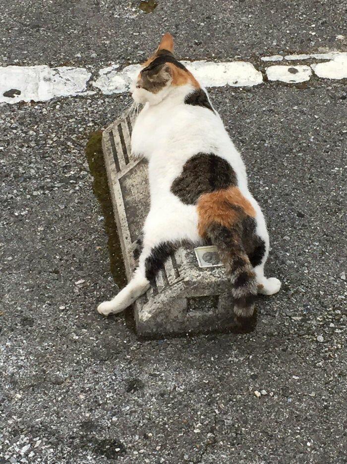 148550 Кошки в Японии используют парковочные барьеры как подушки, и это выглядит очень забавно