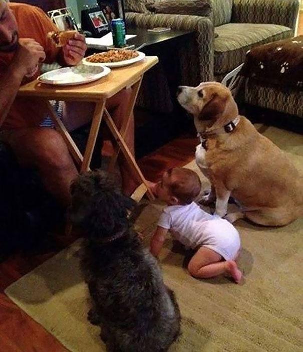 Эти собаки-попрошайки заставят вас отдать не только свою еду, а и ключ от сейфа, где деньги лежат
