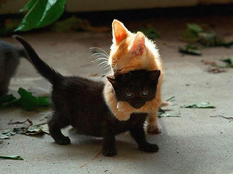160718 25+ доказательств бесспорных талантов котов