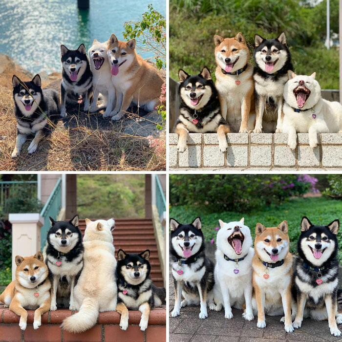 162141 Гарантия хорошего настроения: 12 фотографий самых милых и очень смешных собачек