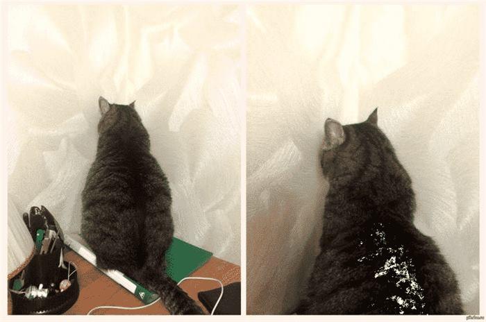 165673 12 примеров того, как выглядит настоящая кошачья обида