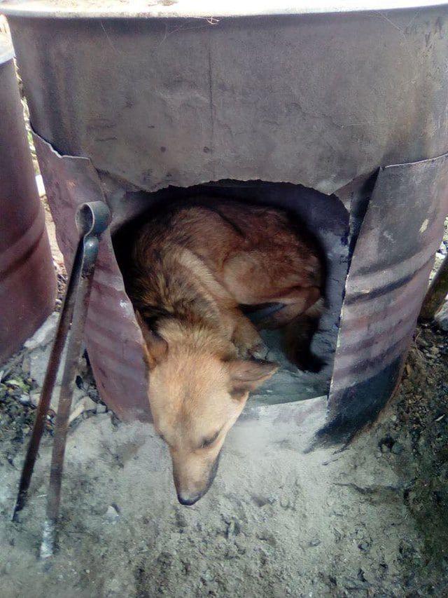 165104 Чтобы спасти раненого пса парень пошел в непроходимые горы