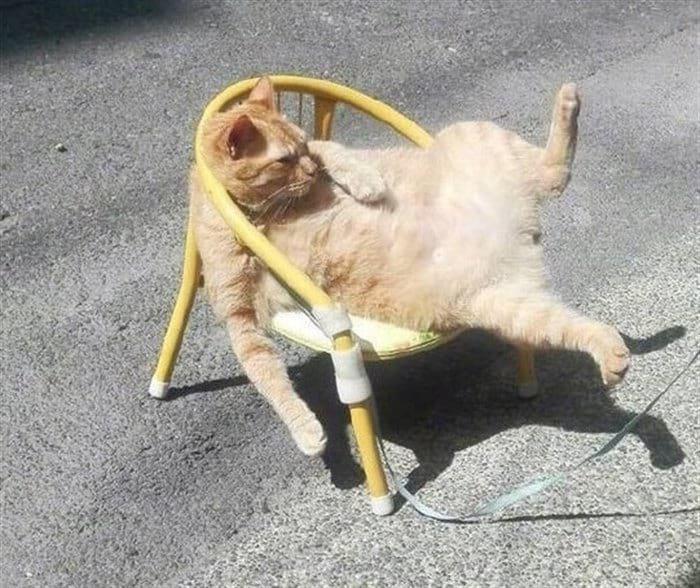 166741 13 смешных мини-историй в картинках про котиков
