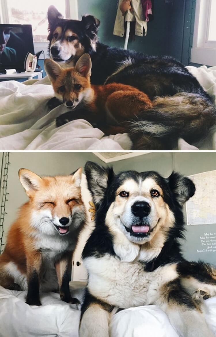 167622 30 трогательных фото «До и После» животных, которые выросли вместе