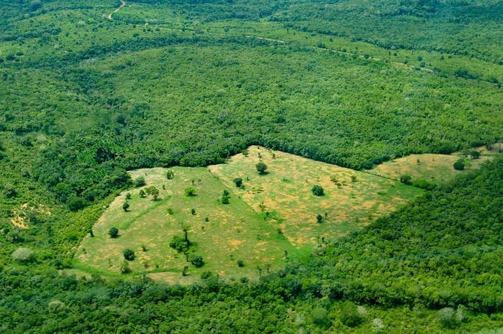 167901 Амазонка действительно может усугубить изменение климата